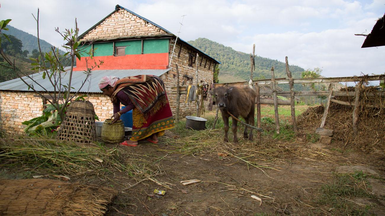 NEPALBHUNDI14