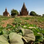 MYANMARBAGAN28