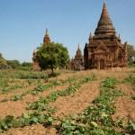 MYANMARBAGAN33