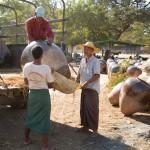 MYANMARBAGAN38