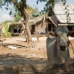 MYANMARBAGANCAMPAGNE15
