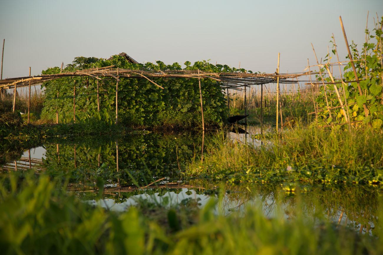 MYANMARINLE1 77