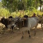 MYANMARINLE4 56