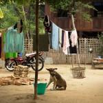 MYANMARMINGUN40