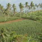 PHILIPPINESVIVIAN121