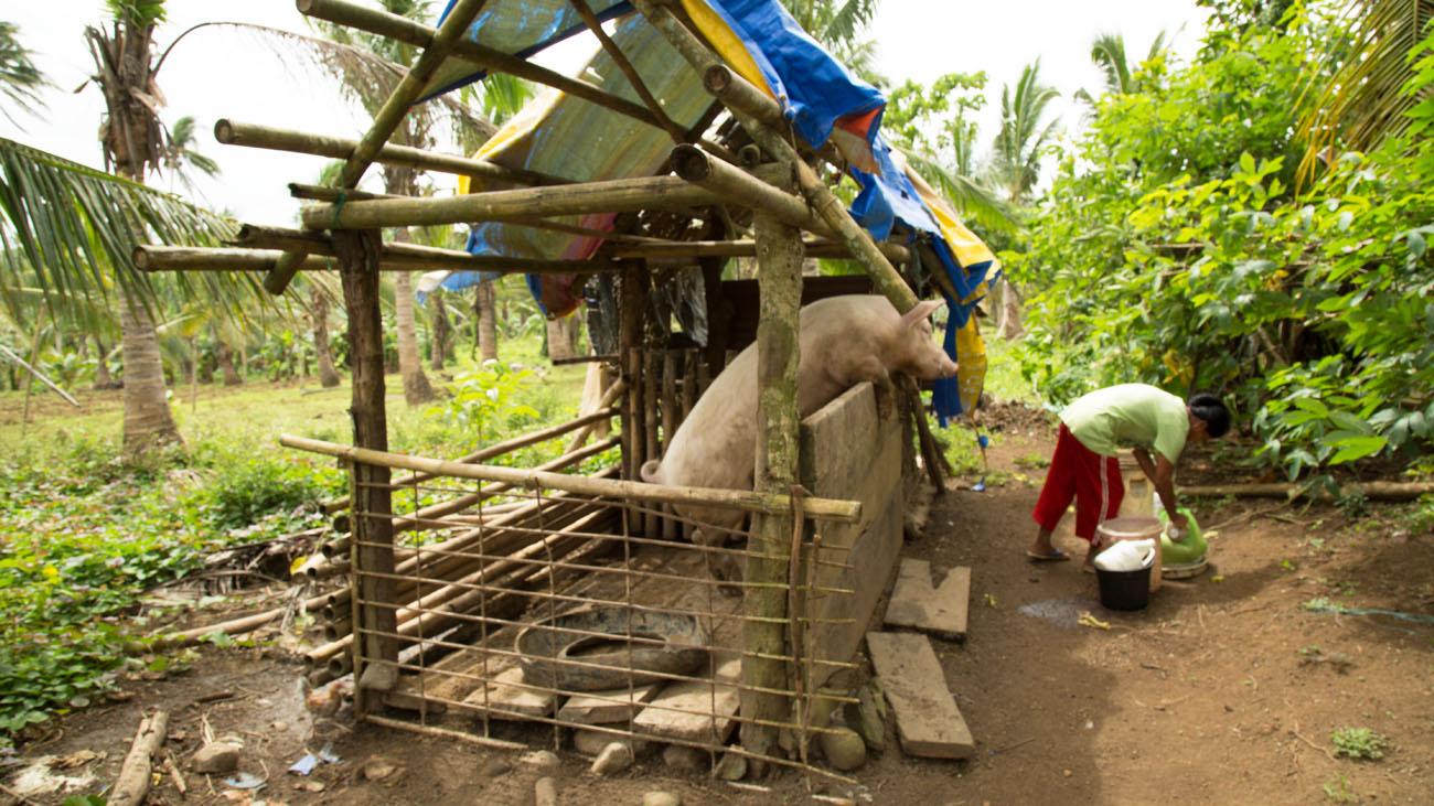 PHILIPPINESVIVIAN22