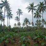 SAMOASAVAIISA26