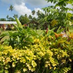 SAMOAUPOLU16