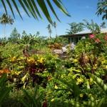 SAMOAUPOLU19
