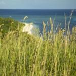 FIDJIMANAISLAND14